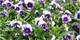 blomster_468