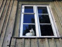 Vinduer som er mer enn 20 år gamle slipper ut ca 2,5 gangermer varme enn nye vinduer.