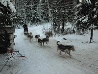 Huskies,dogs,Rovaniemi,Finland,Soumi,Santa Claus