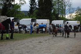 Mange hester_1024x681