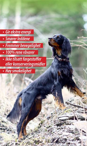 Hundepolseforsidebild370