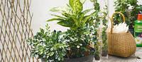 slik lykkes du med grønne inneplanter