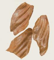 Okseorer-natur-180.jpg