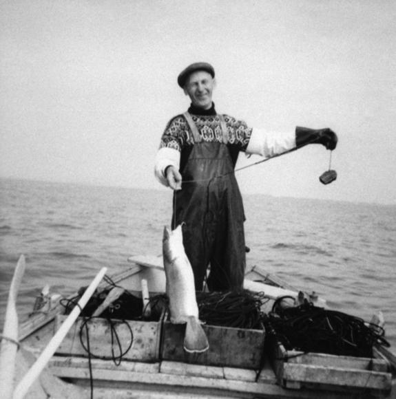 Fiskar med torsk