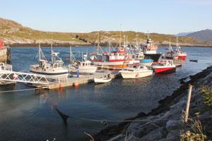 Brygge-og-båter.jpg