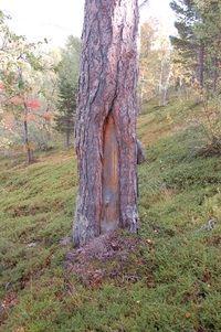 Kulturspor i trær_200x301
