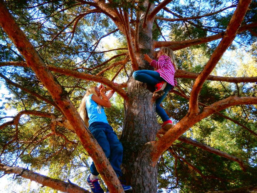 Barn som klatrer i trær