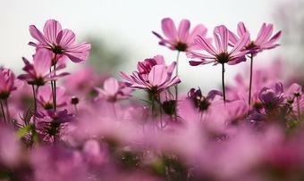 Blomster illustrasjonsbilde