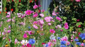 Blomstereng_1024x681