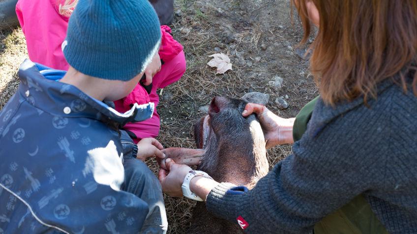 Barn kjenner på tunga til elgen.