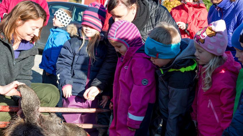 Barn studerer elgen.