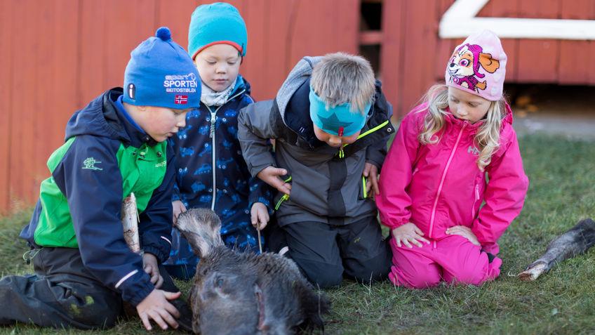 Barn studerer hodet til elgen.