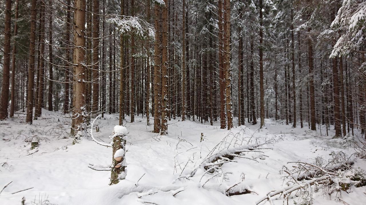 Skiptvetskogen.jpg