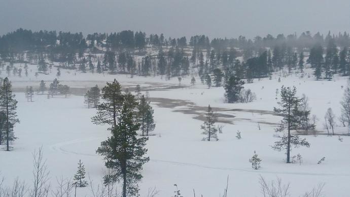 Kringlåttjønna Helgetunmarka 200418_690x388.jpg