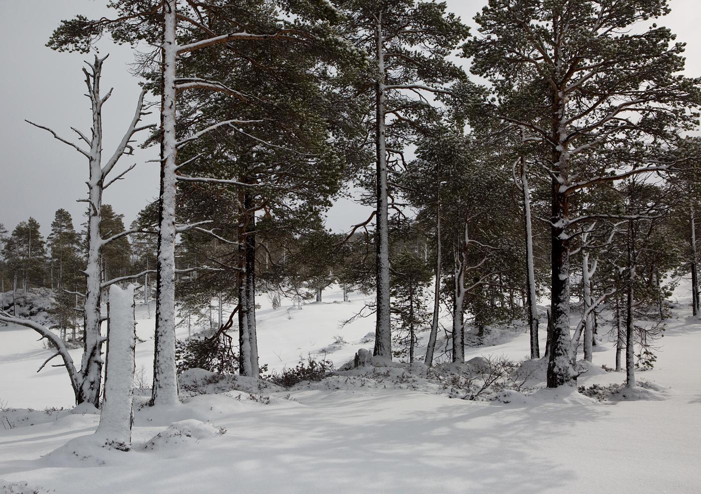 210402e-trær.jpg
