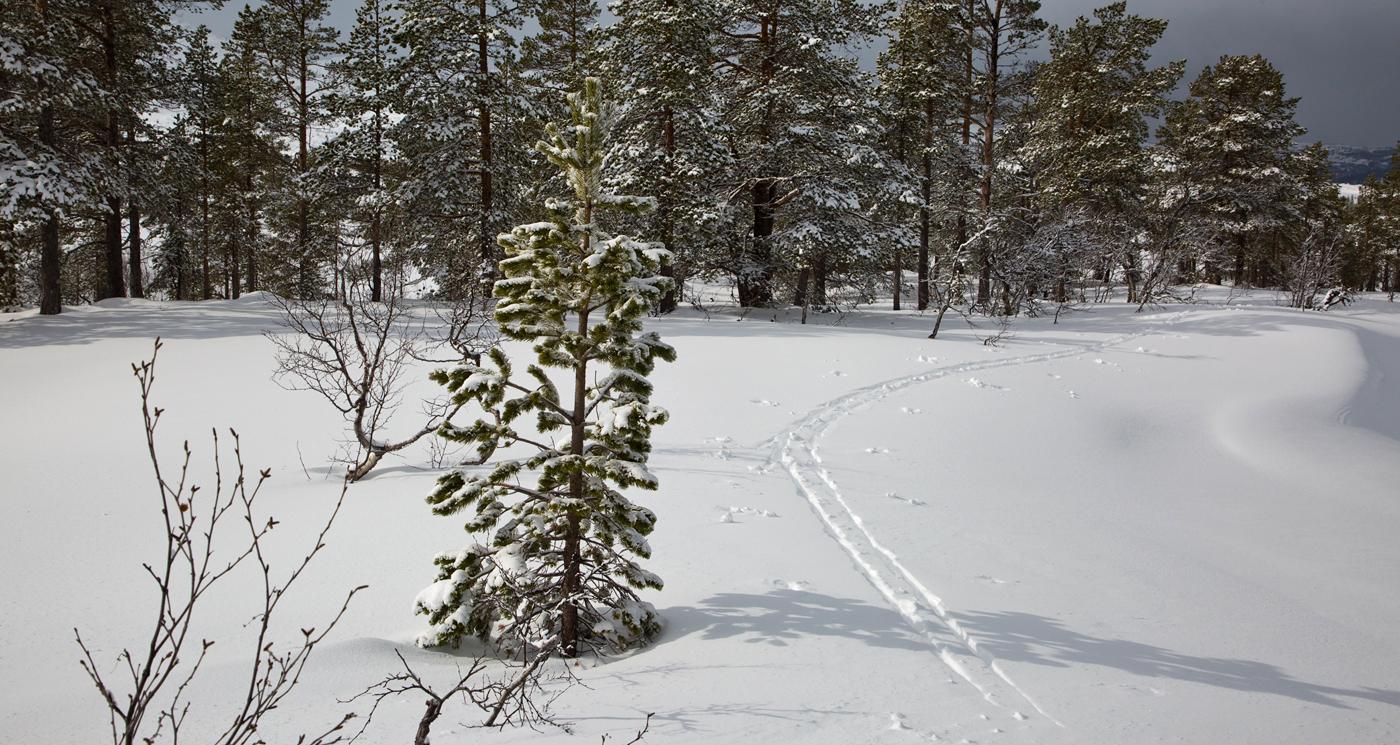 210402k-skispor.jpg