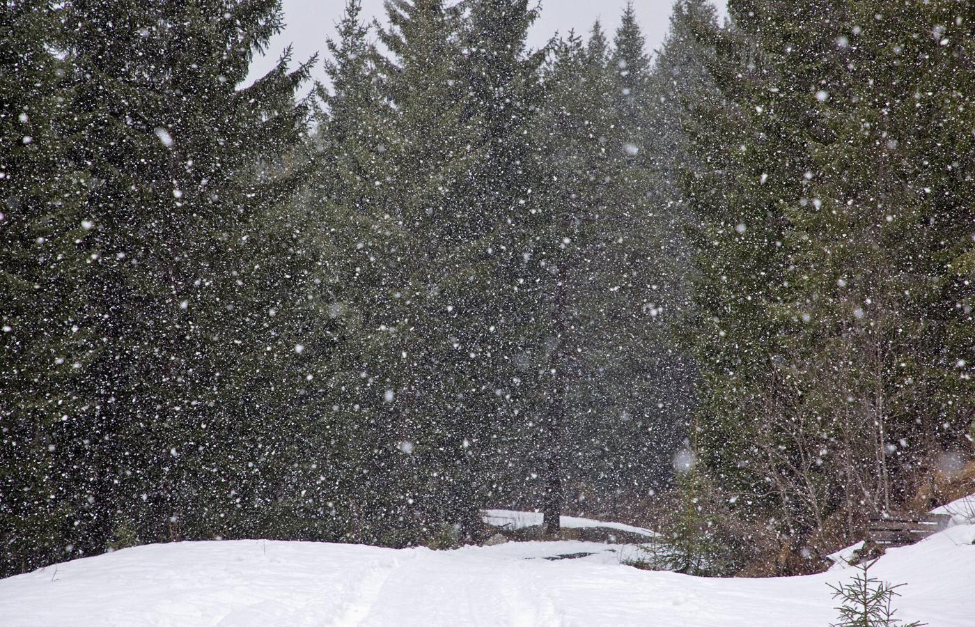 210402n-snøvær.jpg