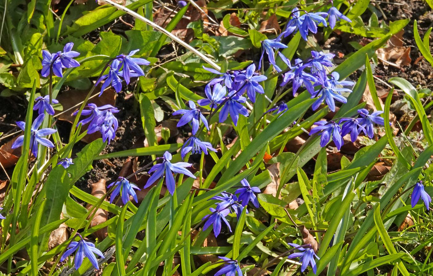 210418i-blomst.jpg