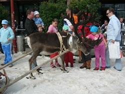 Reindeer,reinedeers,Rovaniemi,Lapland,Finland,SantaClaus