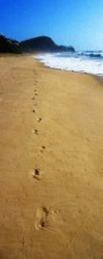 Nye Spor i sanden