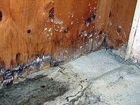 water damaged basement