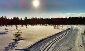Skispor vinter