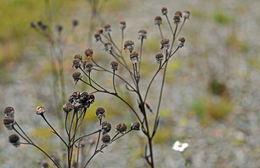 Botanik-8