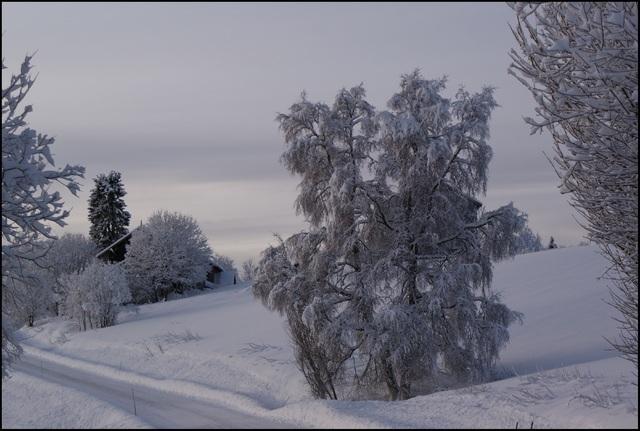 Bjørk 4 rm