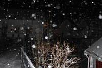 Vintervakkert i Lyngør