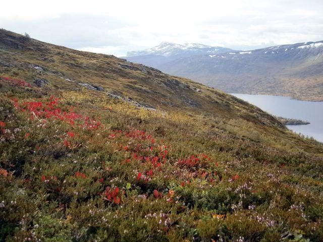 1 Flotte høstfarger i fjellet