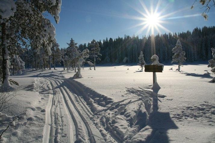2 Ved Lomtjønna - 4 km_715x476.jpg