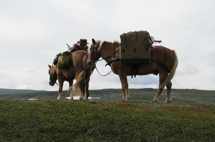 Lyngshestlandet Nord-Troms