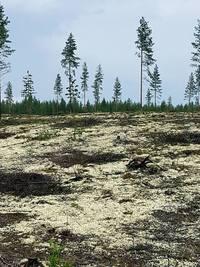 Rokua Geopark,Finland