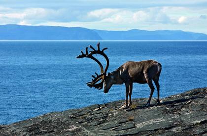rein-ved-riksveg-889-nasjonal-turistveg-havoysund-foto-anne-olsen-ryum-for-statens-vegvesen