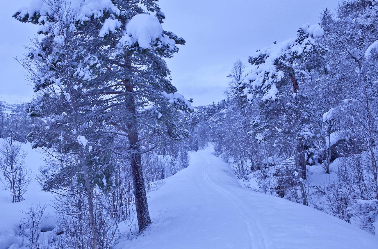 170221e-skispor.jpg