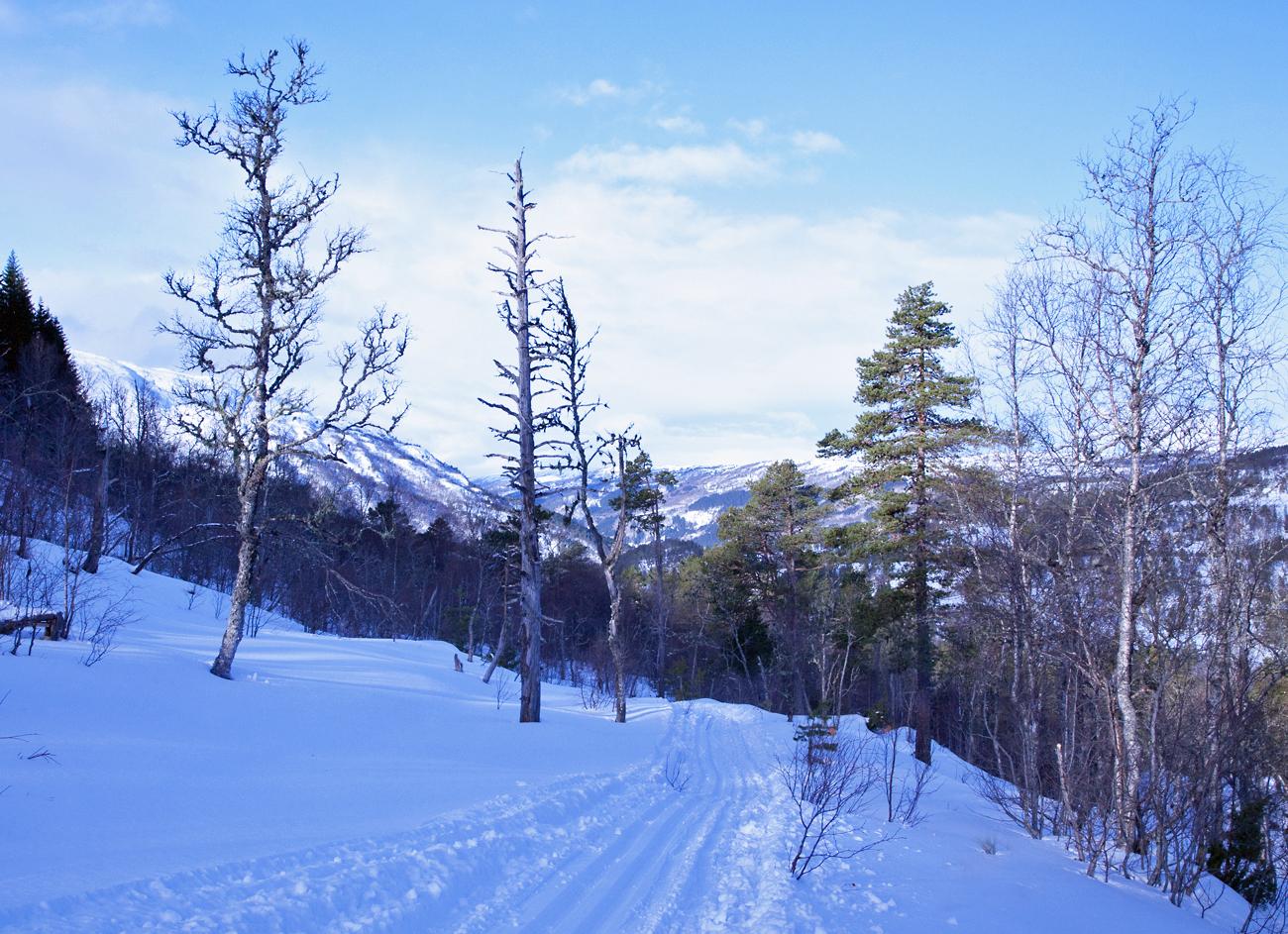170321b-skispor.jpg