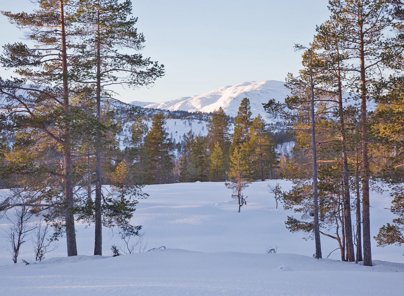 180118c-Sandfjellet.jpg