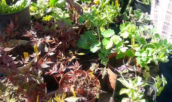 Surnadal hagelag planteloppemarked