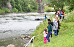 andeløpet elva