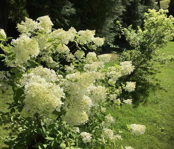 Blomsterbilde arboretet2