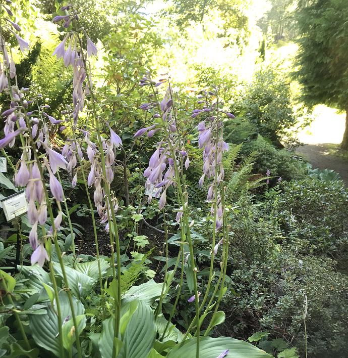 Blomsterbilde arboretet3.png