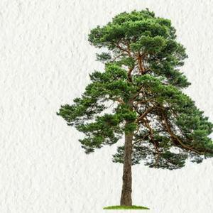 Trær i Norge_Håpnes, Arnodd