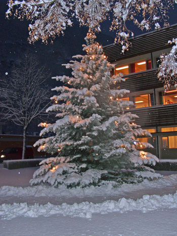 Juletre - Lærdal kommune