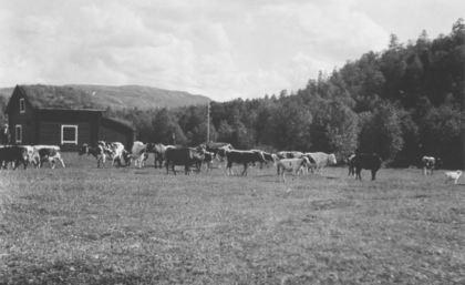 Kyr, jordbruk, Finnmark
