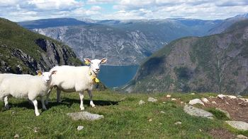 Landbruksplan ÅLA 2018-2021 - framsidefoto