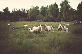 Beitedyr kan utnytte naturressurser som er tilgjengelig hos oss