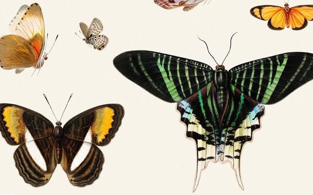 bilde av Sommerfugler