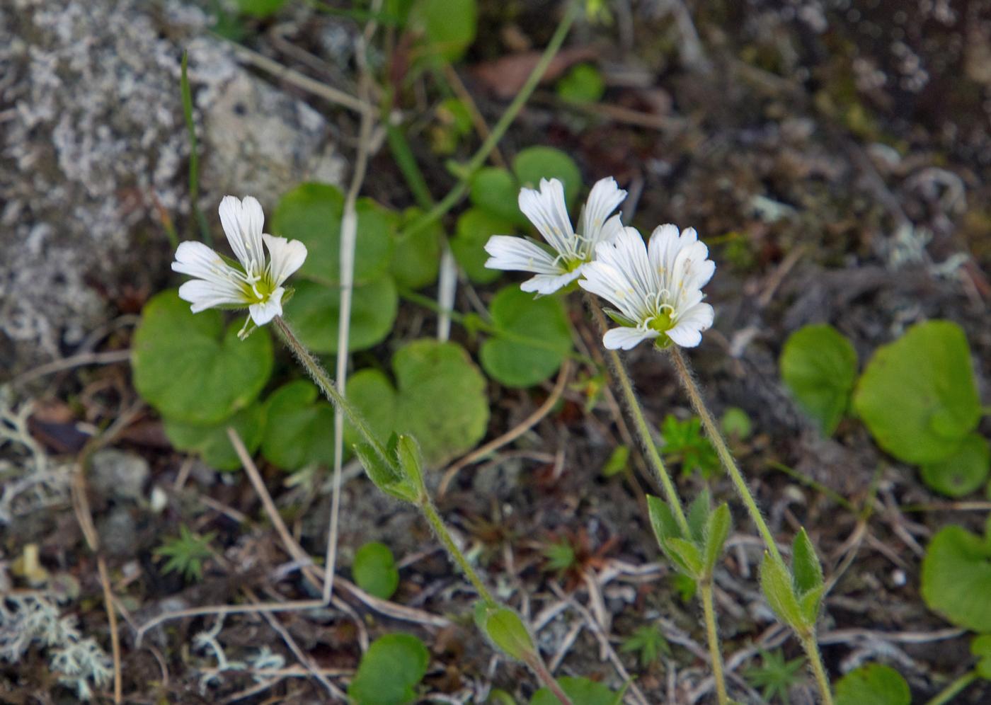 190724o-blomst.jpg