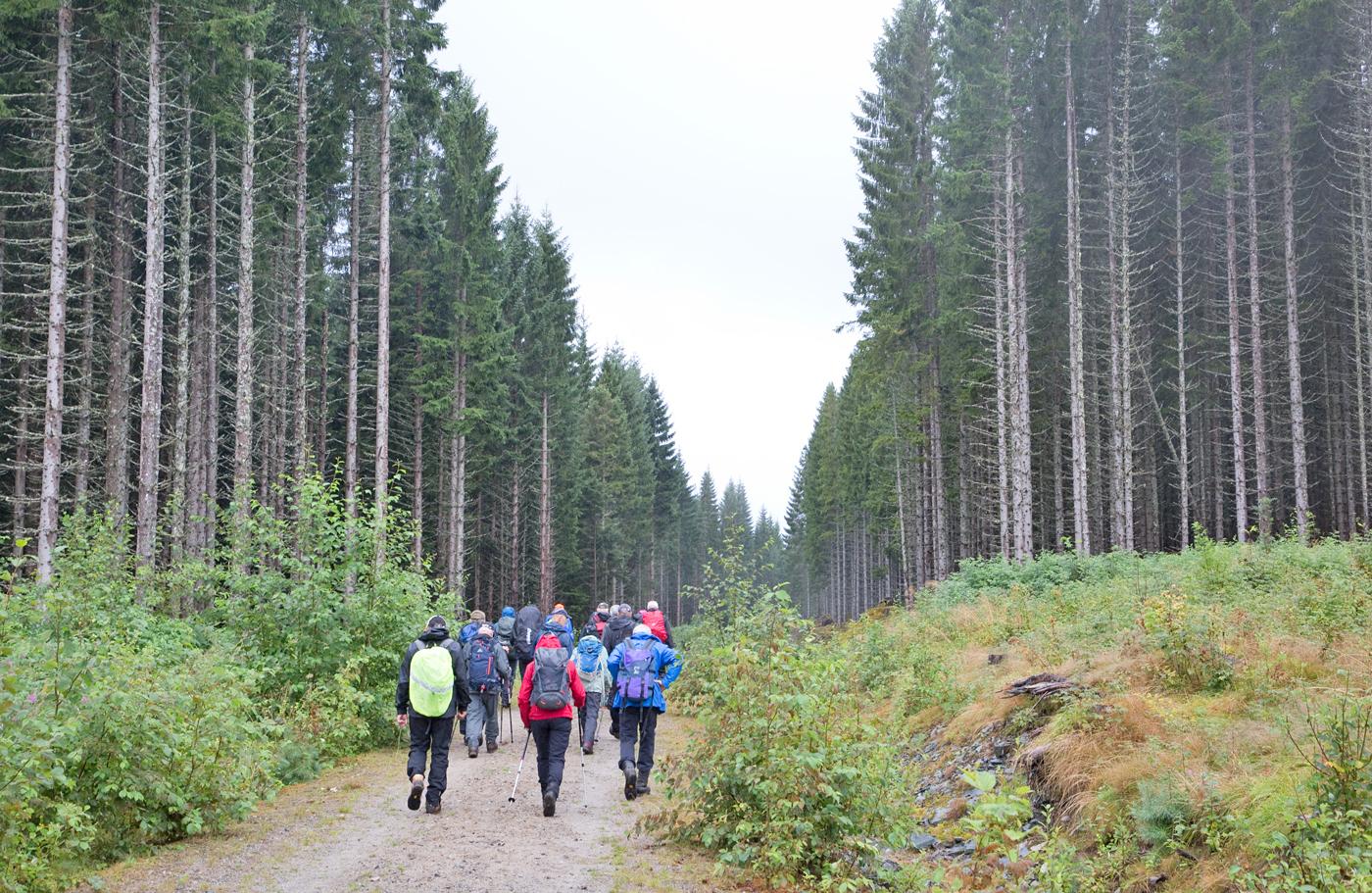 190813c-skog.jpg