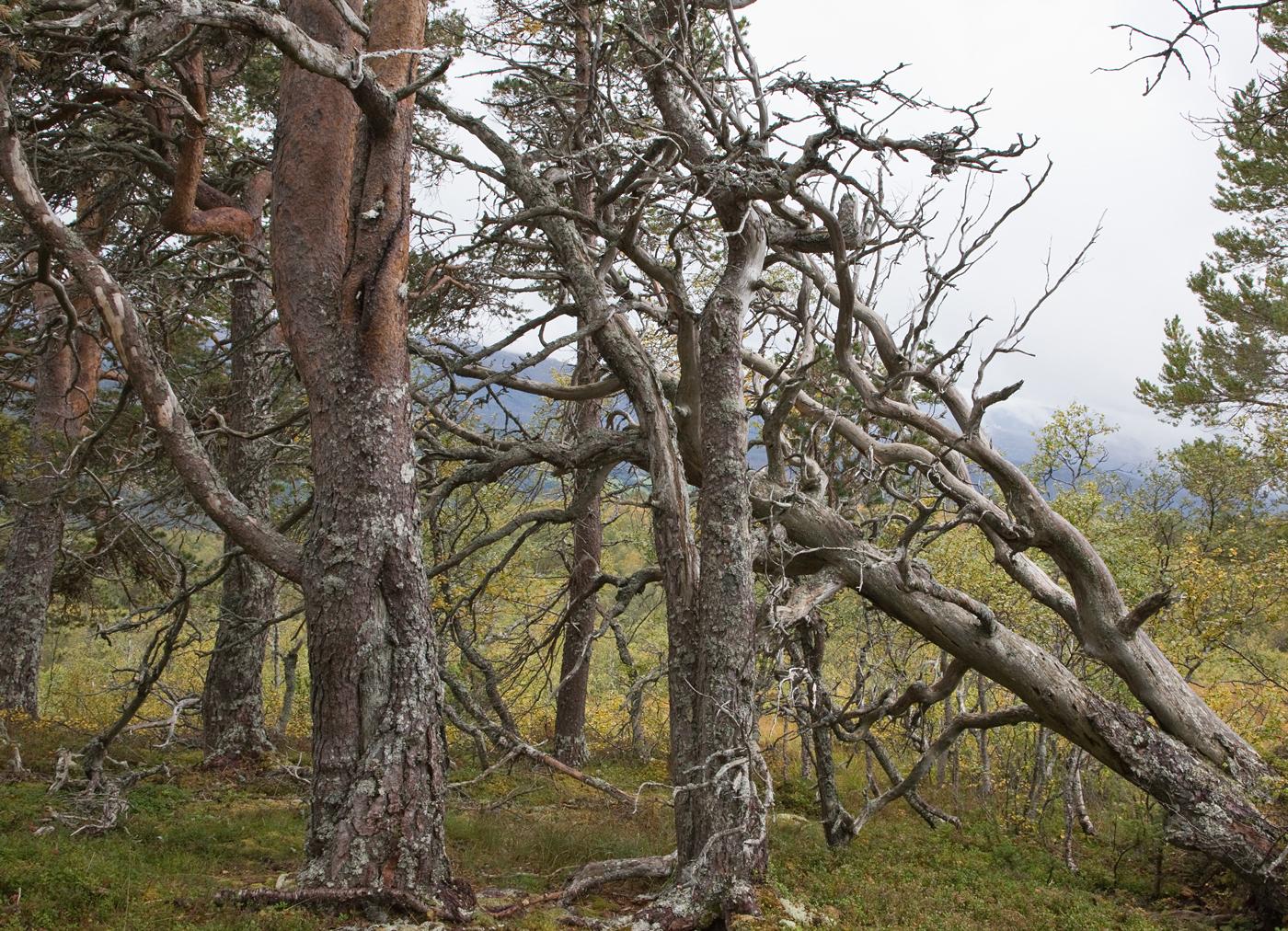 190912k-trær.jpg